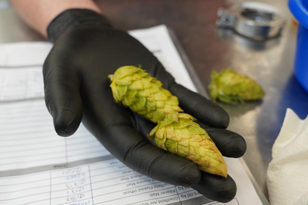 Nectaron hop cones on display.
